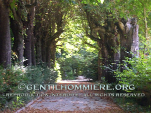 Allée des marronniers - Under the old chestnut trees
